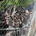 The Walking Dead Episode 2 still #1
